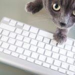 Ces fichues bonnes résolutions : qu'en pense votre chat ?